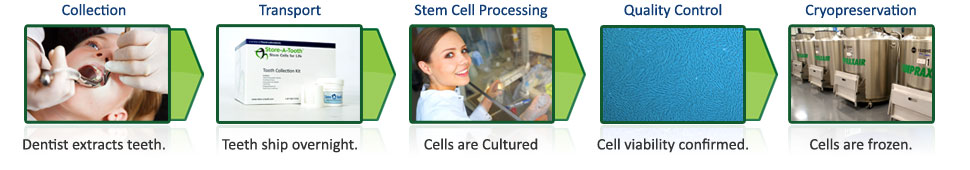 Stem cell banking process